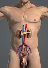 Лечение мочеполовых заболеваний